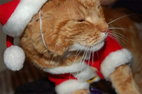 Even Ginger Cats Have The Christmas Spirit