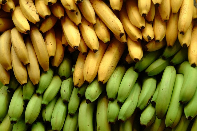 A Fungus Is Destroying The World's Bananas