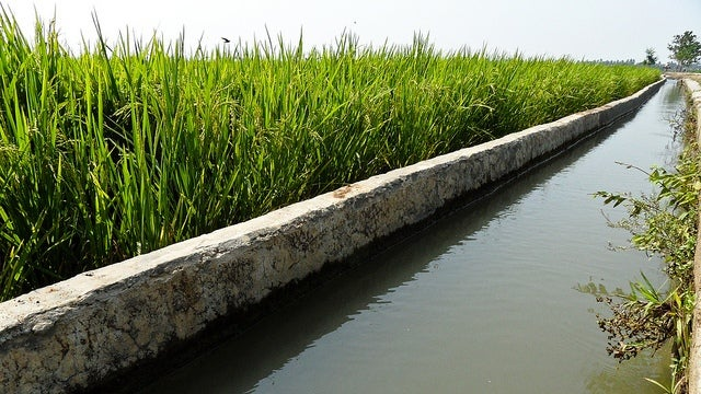 Irrigation might actually be raising sea levels