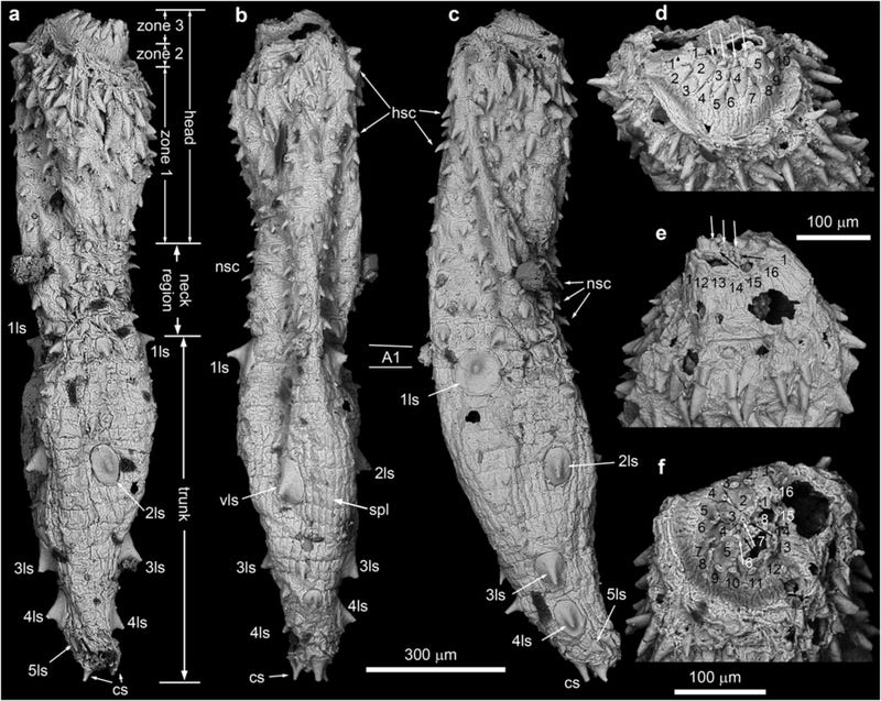 This Ancient Armored Mud Dragon Could Help Solve an Evolutionary Mystery
