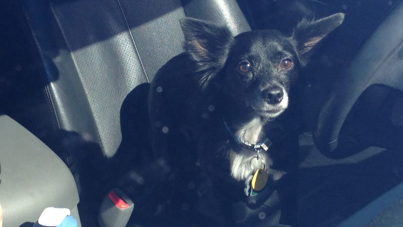 What's The Best Car For A Dog Owner?