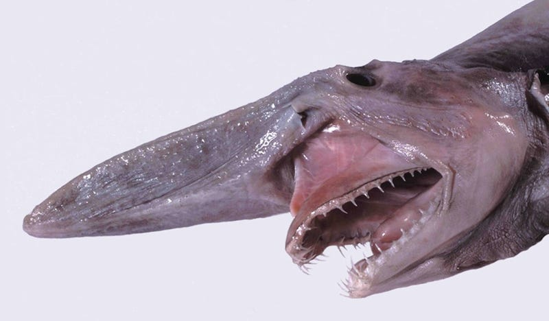 These Sea Creatures Are Clearly From Outer Space