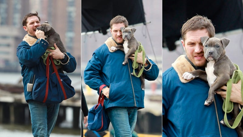 You Guys, Tom Hardy Nuzzled a Puppy Today