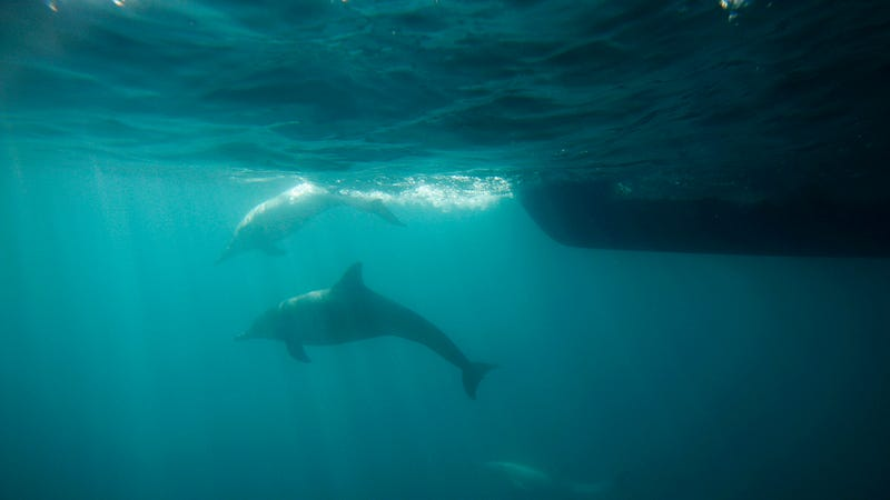 Sorry, Dolphins Are Not Geniuses