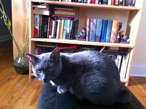 Caturday Night Special: Reader Kitties Are Surly & Sweet