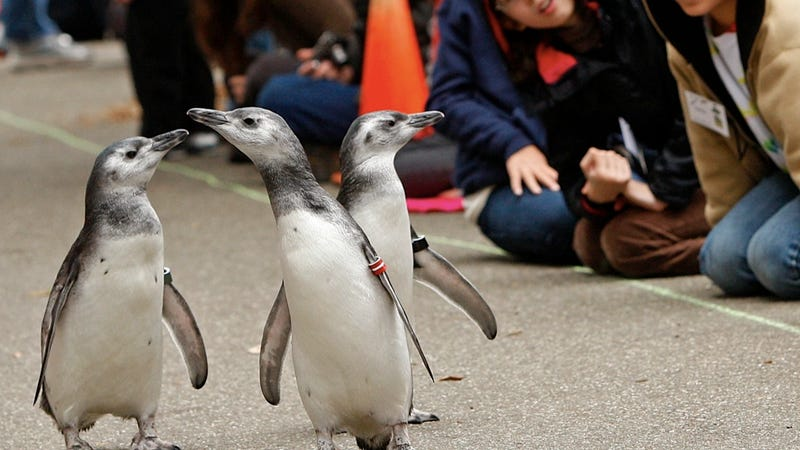 Adorable Penguin Couple Has Been Holding Wings for 16 Years