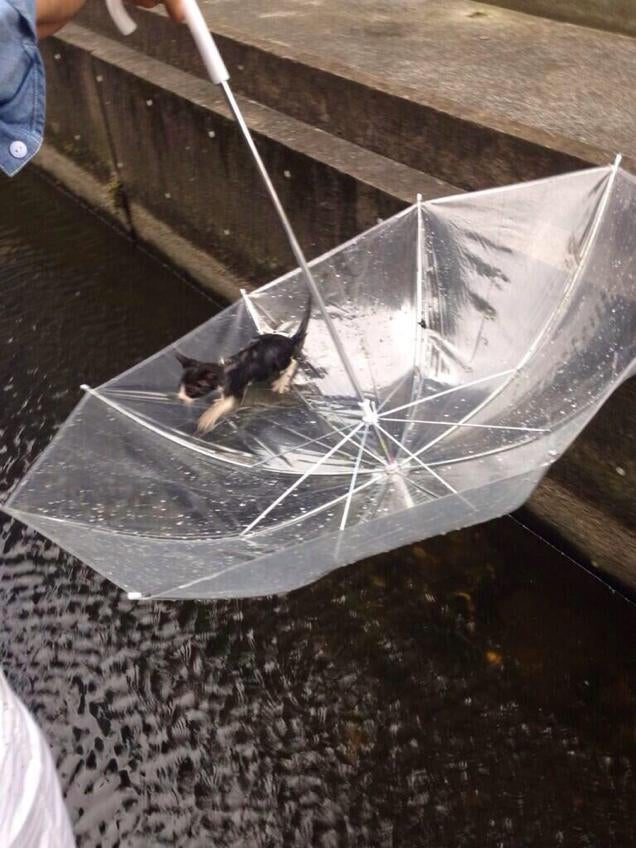 ​Heroic Rescue of a Kitten Captured on Twitter