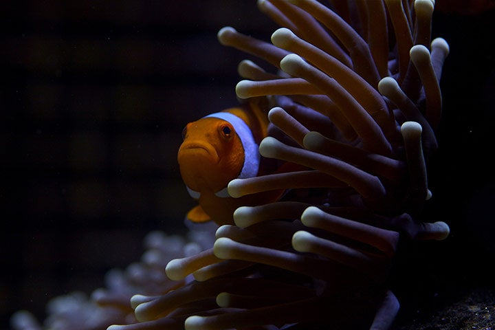 BBC's new Great Barrier Reef documentary serves up some serious eye candy