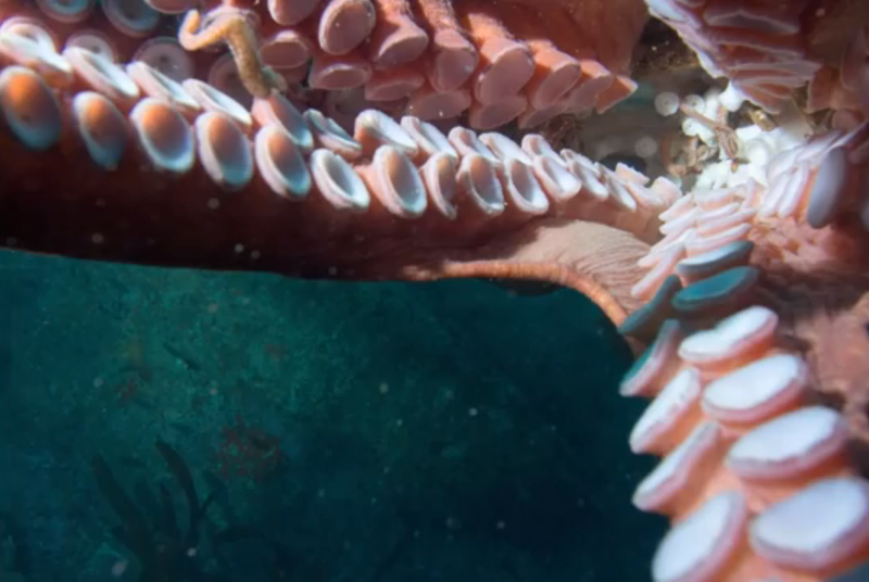 What it looks like when an octopus decides to steal your camera.
