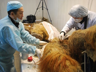 No, we are not going to be cloning this newly discovered wooly mammoth any time soon