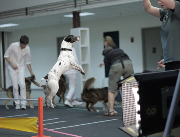 New OK Go Awesome Video Is Full of Awesome Dogs