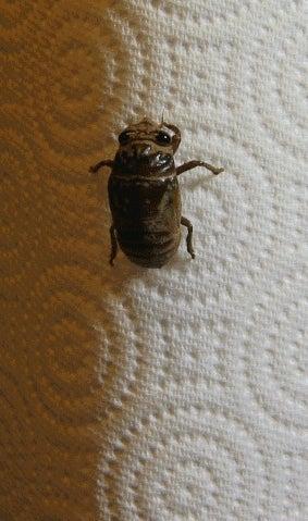 Cicada! Wat r u doin? Cicada! Stahp!