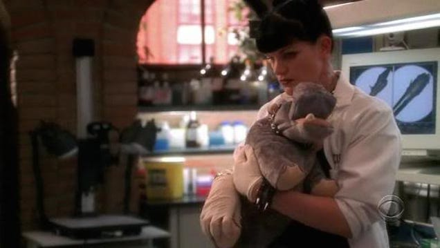 CBS Embroiled in NCIS Farting Hippo Puppet Lawsuit