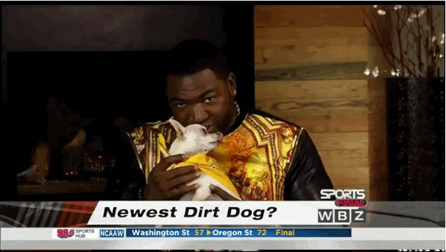David Ortiz Films Interview With Tiny-Ass Dog On His Lap
