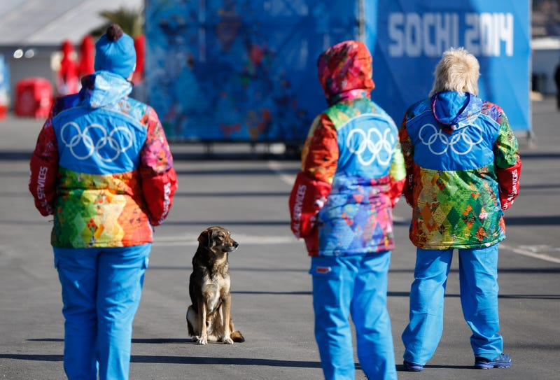 Motel For Stray Dogs Near Sochi Has Roughly 100 Occupants