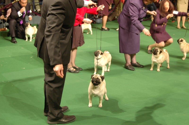 Lapdogs And Luxury Boxes: A New-Look MSG Welcomes The Westminster Dog Show