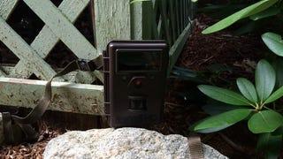 Camera Trap Practice