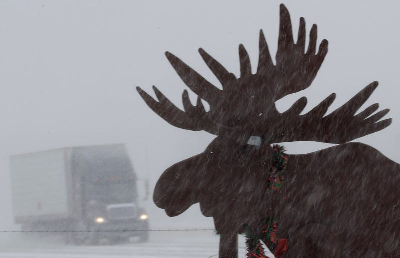 Mysterious Mass Moose Deaths Strike North America