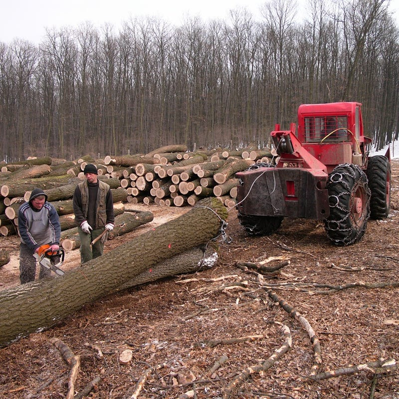 A First-Hand Look At Europe's Monster Logging Machines