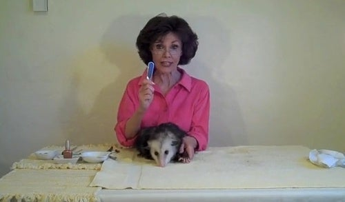 The Woman Who Gives 'Possum Pedicures And Massages