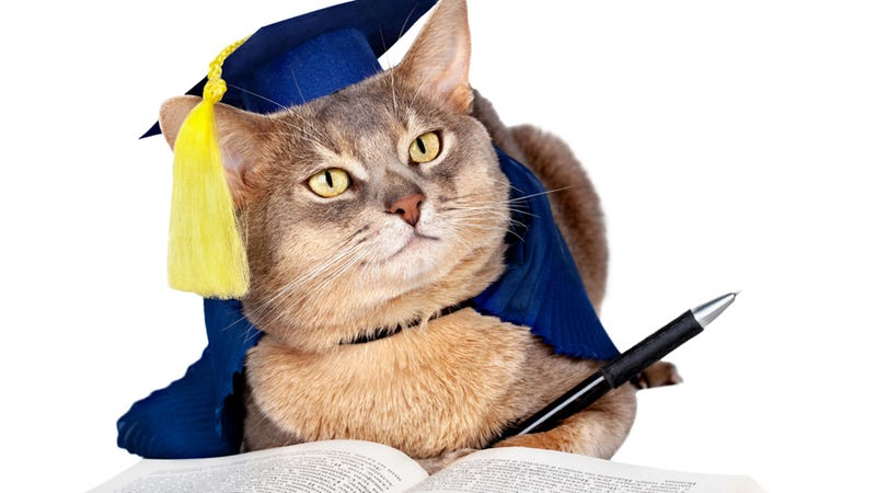 Why Are These Cats and Dogs Saddled With Student Loan Debt, Barack Obama?