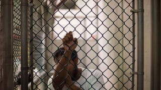 Pretty Much Every U.S. Demographic Group Believes Torture Is Justified