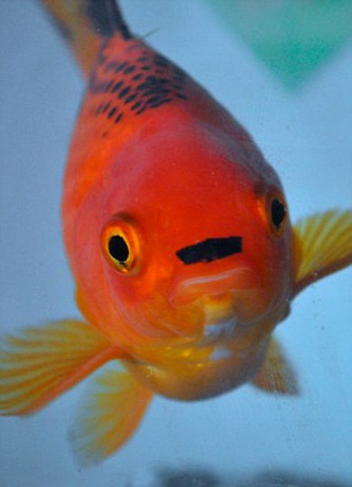 Stop The Presses: This Fish Looks Like Hitler