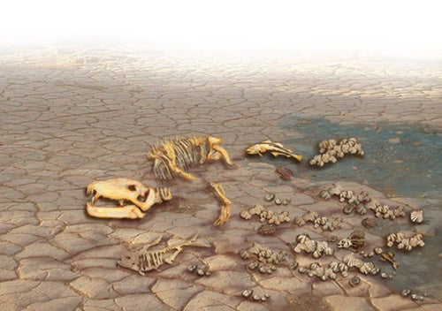 Are we in the middle of a mass extinction?