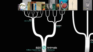 """How does evolution work? One way to get a real sense of how the process has unfolded is with this videogame from NOVA Labs, which lets you build an evolutionary tree of how different species emerged. The best part is their """"Deep Tree"""" which maps relationships between 70,000 different species."""