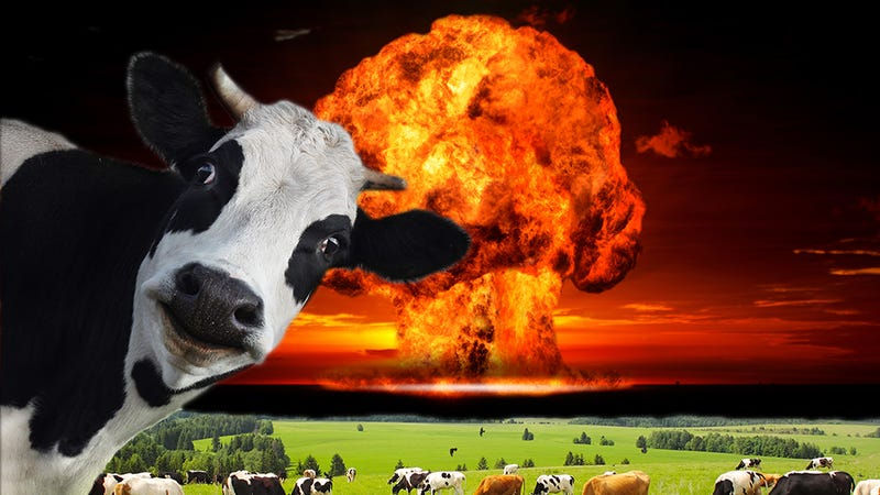 What. The. Hell. Flatulent cows in Germany caused a massive explosion