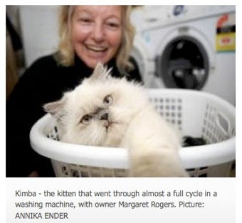 Cat Survives Spin Cycle In Washing Machine