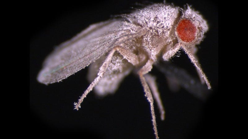 This space fly proves that humans aren't cut for interplanetary travel
