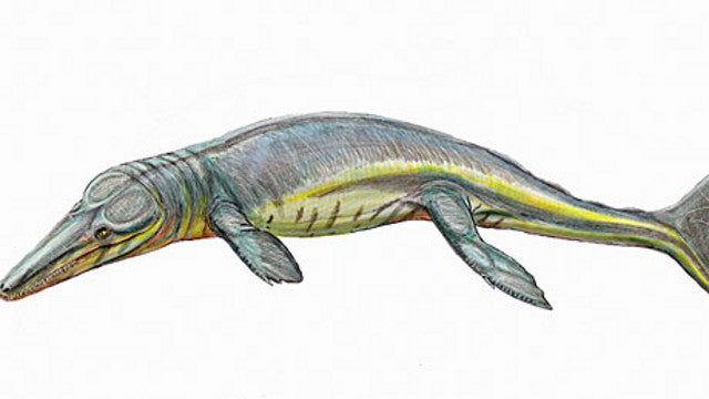 This handsome sea creature is where crocodiles came from