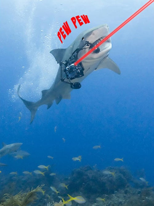 Caption Contest: Camera-Thieving Shark Says...