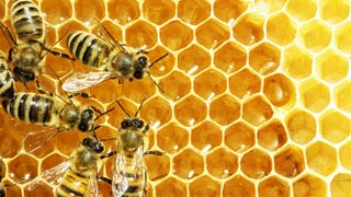 Woman's Apartment Is Secretly Overrun by Bees