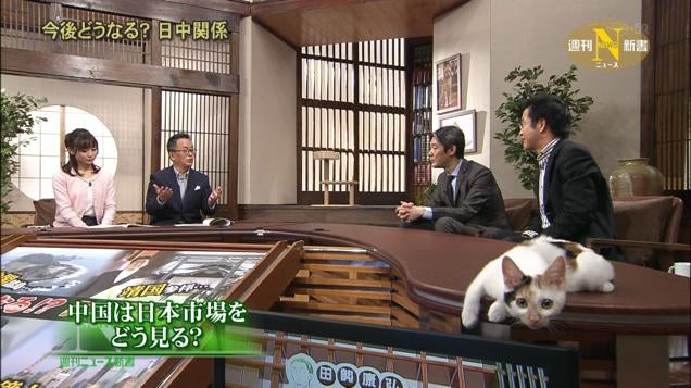 Japanese Cat TV Personality