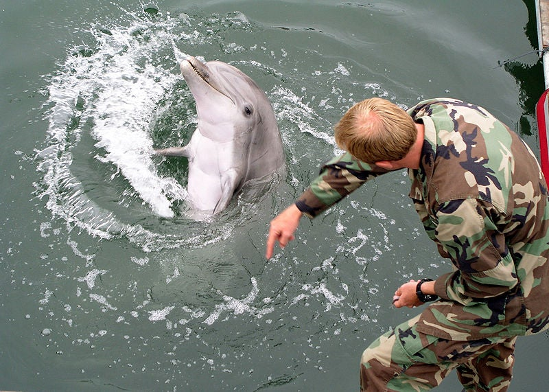 Russia Now Commands A Dolphin Army