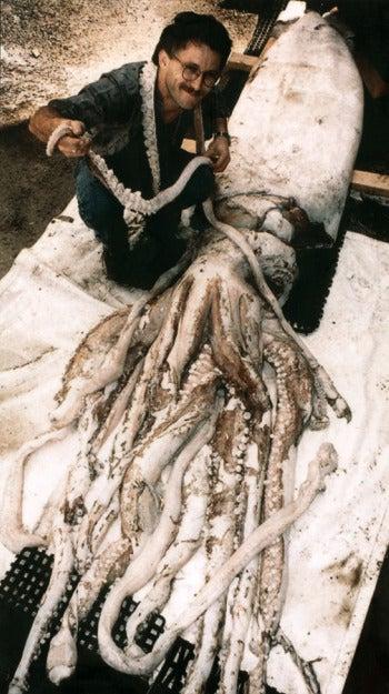 Marine Biologist Hopes to Raise Giant Squid In Captivity