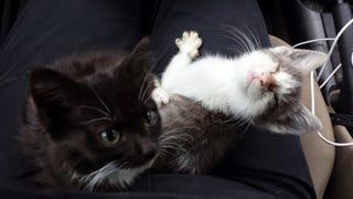 My new kittens!