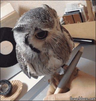 Night, Owls