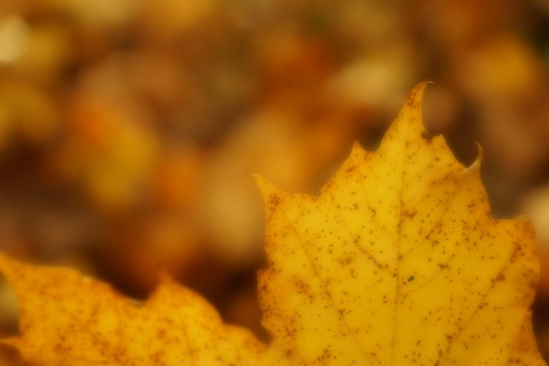 Shooting Challenge Gallery: Soft Focus I