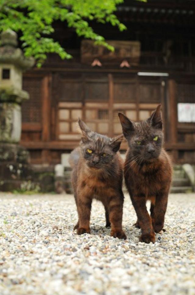 Japanese Cats that Look Like Yakuza Are Frighteningly Cute