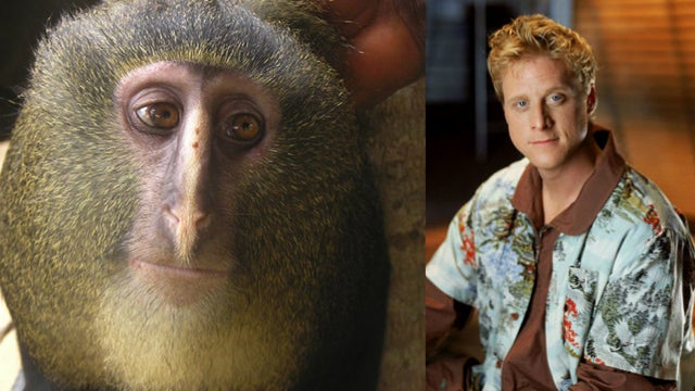 So this new species of monkey looks exactly like Alan Tudyk