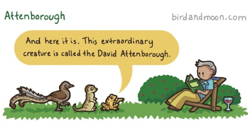 What if David Attenborough were the subject of a nature documentary?