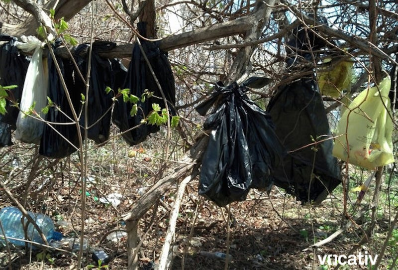 25 Dead Cats Found Hanging From Tree in New York