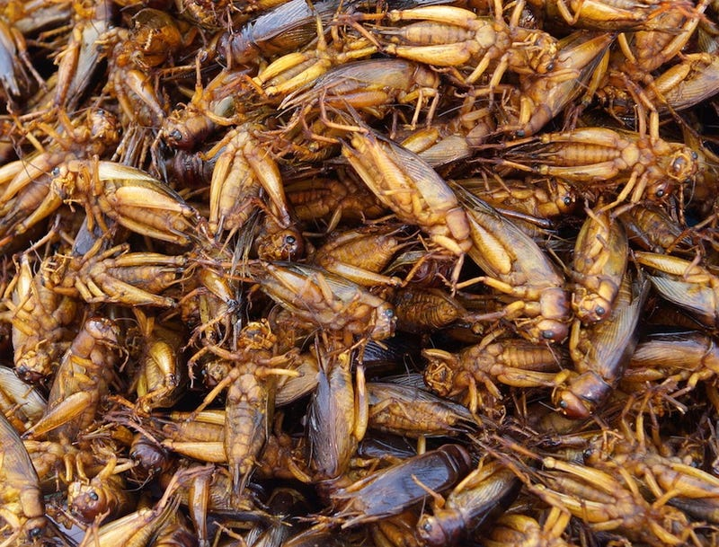 Seriously, why aren't we eating bugs?