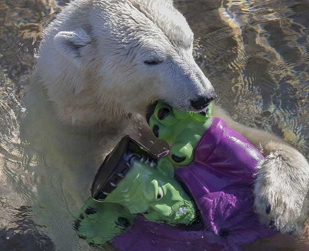 And now, a polar bear drowning Frankenstein's monster