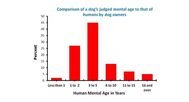 how dogs think stanley coren pdf