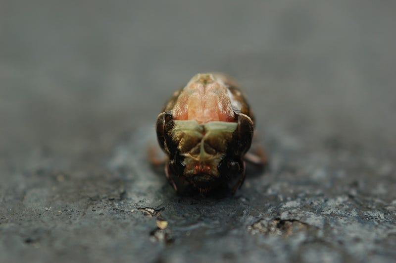 Shooting Challenge: Bugs 1