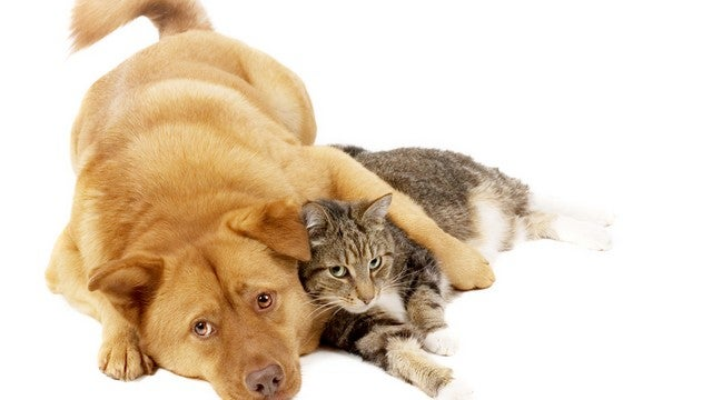Airlines, Liver Disease, Horrible Strangers Coming For Your Pets